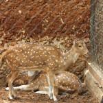 merida zoo 332