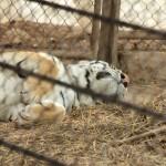 merida zoo 334