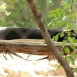 merida zoo 335