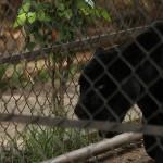 merida zoo 336