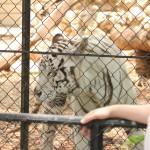 merida zoo 338