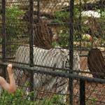 merida zoo 341