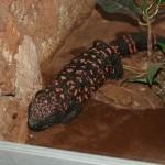 merida zoo 363