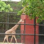 merida zoo 366