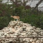 merida zoo 367