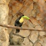 merida zoo 370