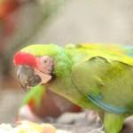 merida zoo 371