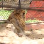 merida zoo 372