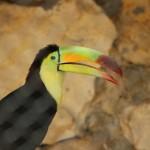 merida zoo 373