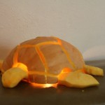 Quincella's Sea Turtle